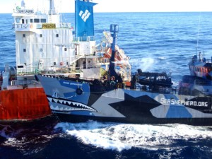 The Institute of Cetacean Research, the umbrella for Japanese whaling, on February 26, 2013 released this photo and a video clip which ICR claimed showed the Sea Shepherd vessel Bob Barker ramming the refueling tanker Sun Laurel. But a longer Sea Shepherd video clip, appearing to show the same incident, shows that the Bob Barker was about the width of a third vessel, the whale chaser Nisshin Maru, from either the Nisshin Maru or the Sun Laurel. The Bob Barker held a straight and steady course between the Nisshin Maru and the Sun Laurel, obstructing the Sun Laurel from refueling the Nisshin Maru for the last ten days of the 2013 ICR whaling campaign. Five times the Nisshin Maru closed the gap, hit the Bob Barker broadside with multiple water cannon blasting the Bob Barker's decks, and eventually pushed the Bob Barker against the Sun Laurel. (ICR photo)