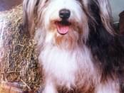 Friend's Dog