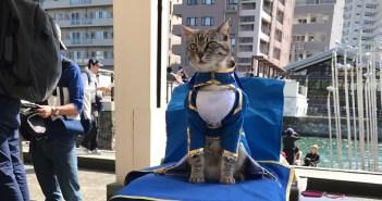 cosplay-cat11
