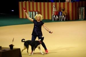 Foto: Anna Wass.  Freestyle och heelwork körs till musik och det är en verkligt medryckande träning. På tävling är det show både för förare, hund och publik.
