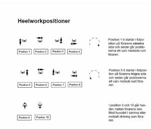 Illustration: Anita Axelsson. I heelwork kan hunden gå i 10 olika positioner samt i fyra olika riktningar och i tre olika tempon i varje position.