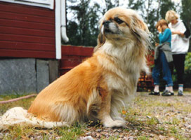 Foto: Anita Axelsson.Sussie var min första hund och det första jag skaffade när jag flyttade hemifrån.