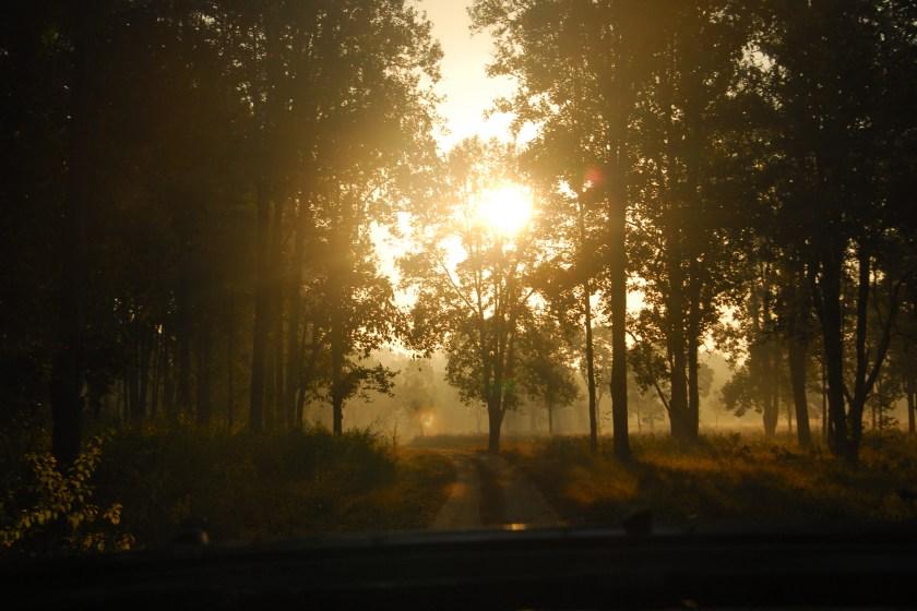 Kanha Forest