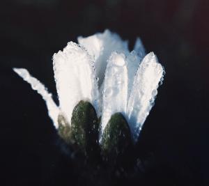 square flower