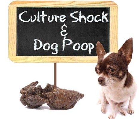 culture shock dog poop france
