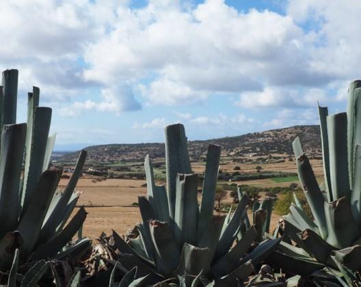What to do on Naxos island