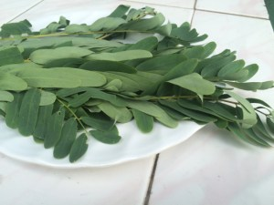 kathuru kola leaves