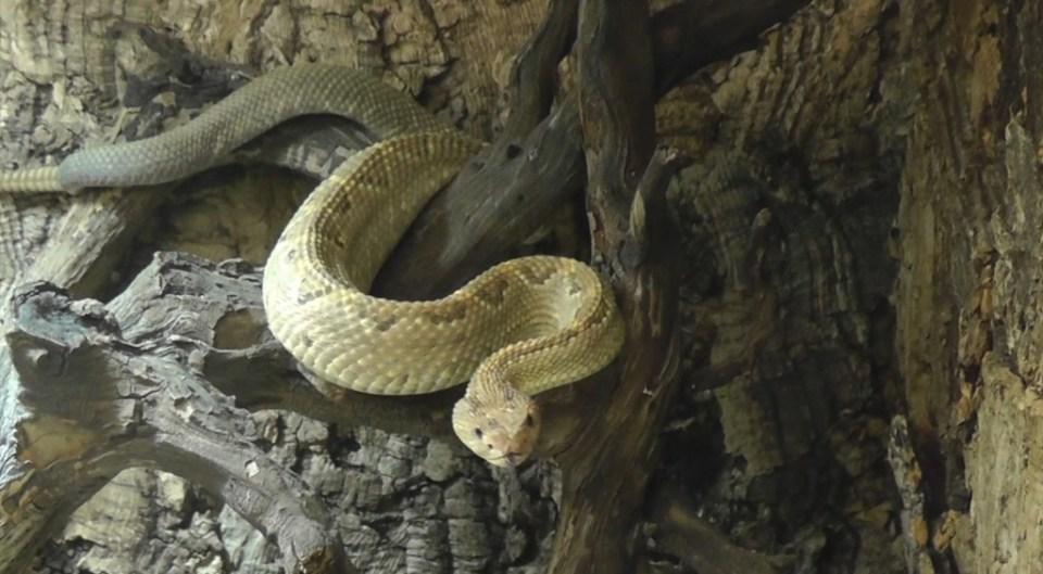 aruba snakes