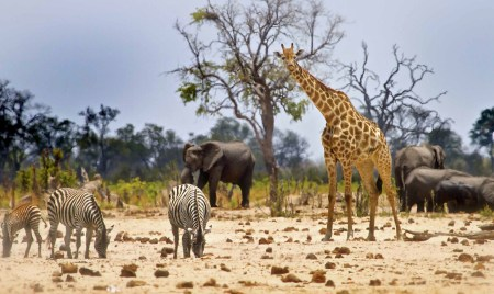 African Safari Cruise Expedition May 19th to June 2nd 2016