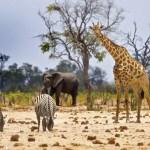 African_Safari_2016_Elephant_Giraffe