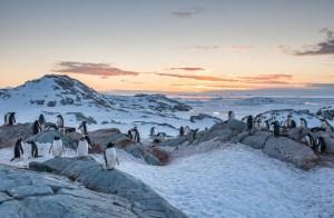 Photographers First Light: Antarctica and South Georgia - Nov 19th - Dec 6th 2016