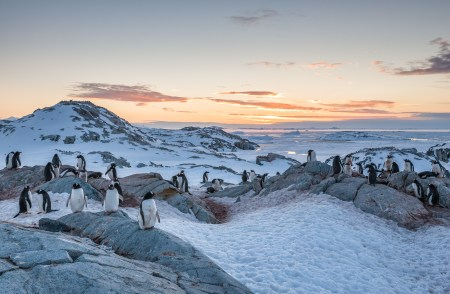 Photographers First Light: Antarctica and South Georgia - Nov 19th - Dec 6th 2016