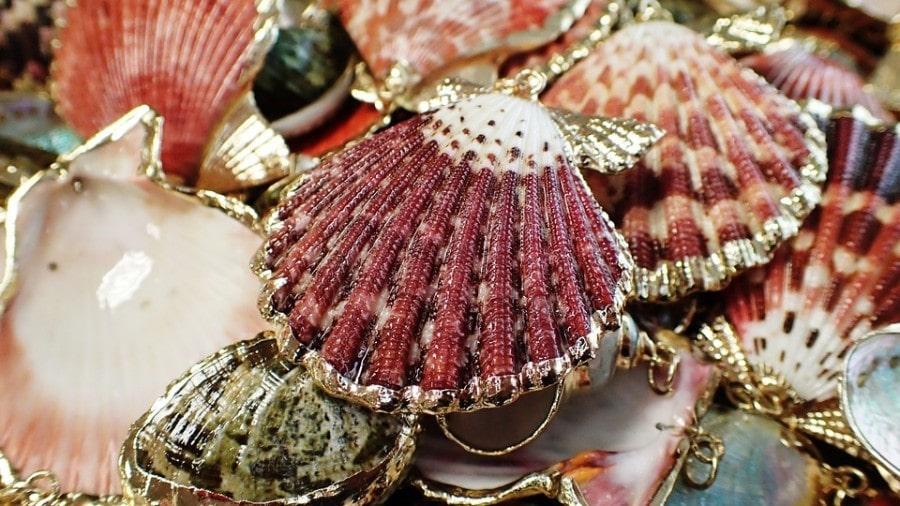seashell-974426_960_720