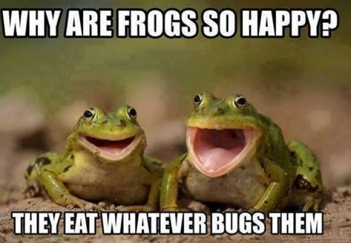 why-are-frogs-so-happy-meme_1