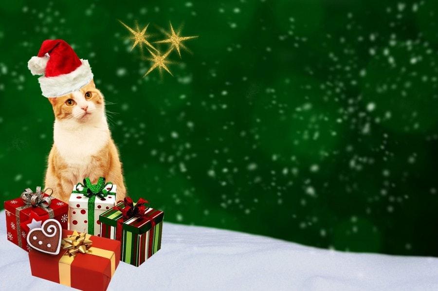 christmas-card-1843372_1920
