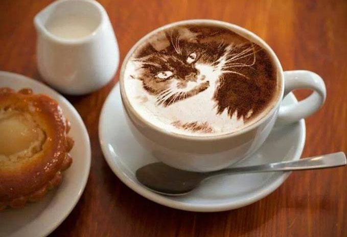caffeine-cat
