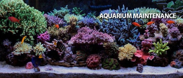 Apex Aquarium | Saltwater Fish, Corals & Aquarium Maintenance