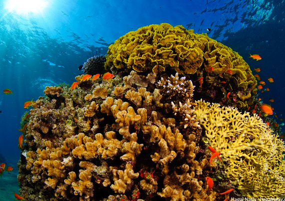 Coral reefs can't survive without fish urine