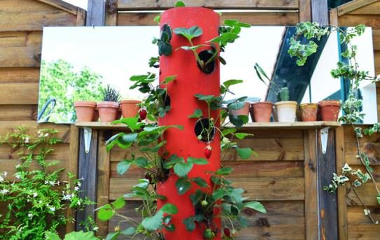 DIY Tour de fraises 1