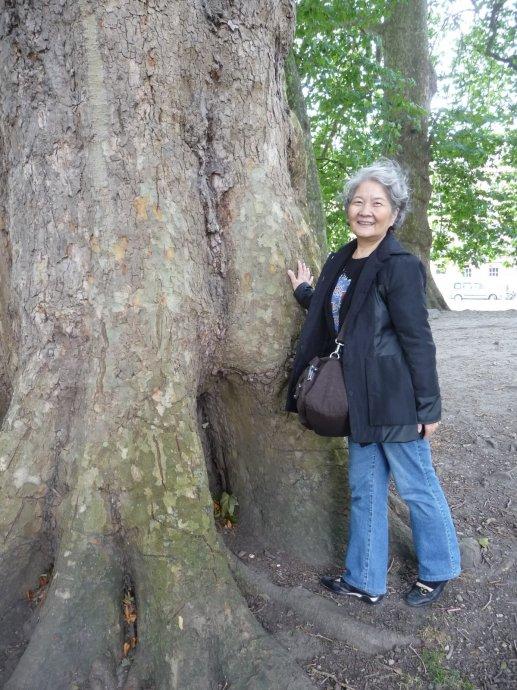 Keiko especially liked the old plane trees.
