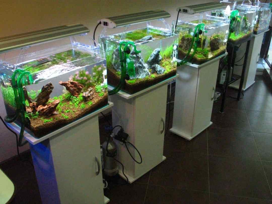 aquarium on a budget