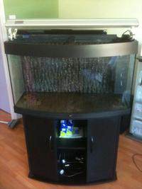 tanks equipment juwel aquarium vision 180 180l bow front 3ft