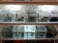 adverts home aquariums fish tanks equipment fish tank breeding set up