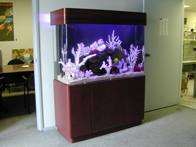 100 Gallon Uni Quarium Marine Fish Tank, Aquarium Design, Marine