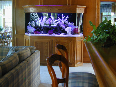 160 Gallon Flatback Hexagon Marine Fish Tank, Aquarium Design, Marine
