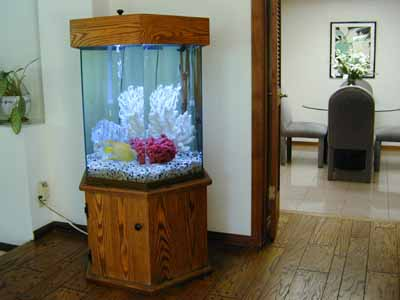 75 Gallon Hexagon Marine Fish Tank, Aquarium Design, Marine Aquariums