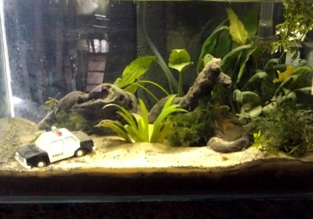 new 10 gallon Betta tank   Aquarium Advice   Aquarium Forum Community
