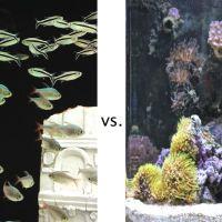 saltwater fish vs freshwater fish - freshwater vs saltwater.gif