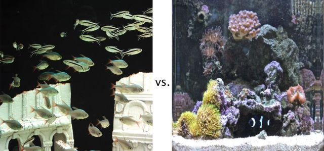Freshwater Aquarium vs Saltwater Aquarium | Aquarium Tip Tank