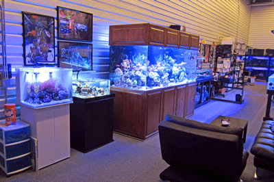 Art, Inc. :: Aquarium Design and Maintenance Specialists (Denver