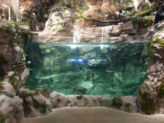Bass Pro Shops Aquarium in Cary, North Carolina