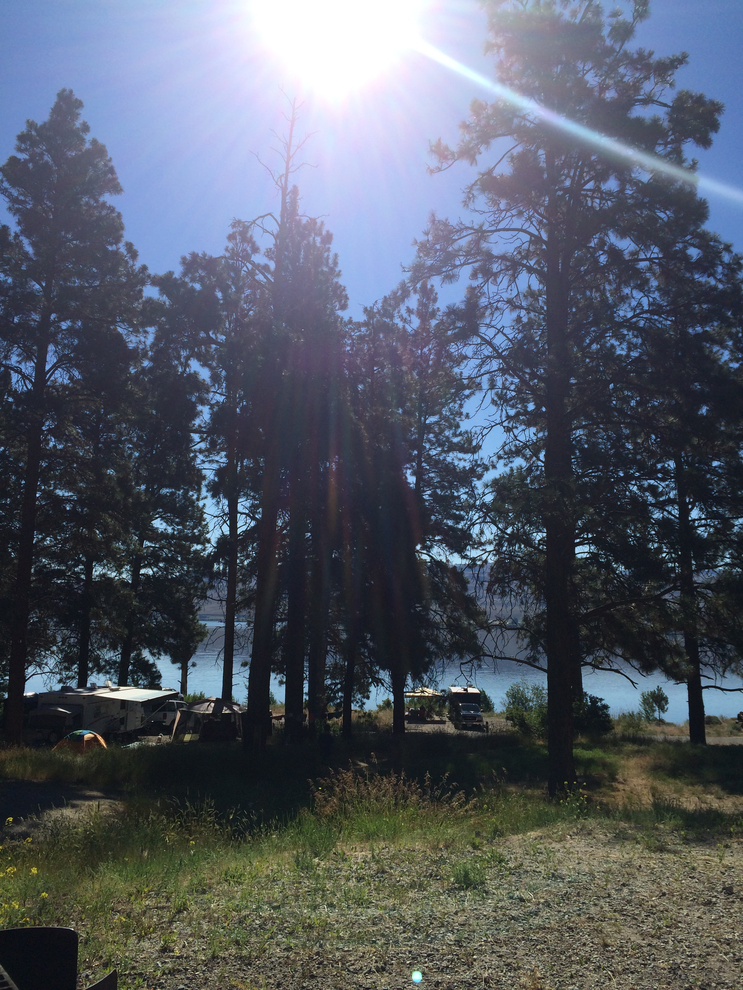 A view from one of the campsites - not ours. Look at all those trees.