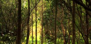 01-Forest-Urbanism-Wang-Nam-Khiao-architectkidd