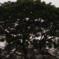 02-Drowning-Tree-Korat-Luke-Yeung