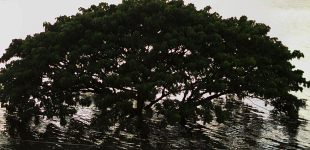 02-Drowning-Tree-Korat-Luke-Yeung