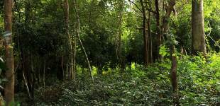 08-New-Forests-South-Khao-Yai-Luke-Yeung