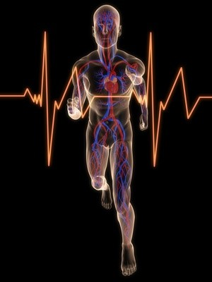 laufender mensch mit vaskulärem system
