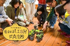 English Farm May 02 copy