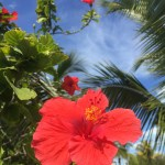 And finally, one I'm confident that I know: hibiscus! But alas, I have no idea which species of the large genus. Tim??