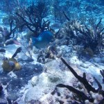 Coral also requires a certain amount of salinity in the water,  ...