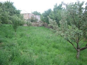 ATP Fruit Trees Irind Village 300x225 ATP Provides Fruit Trees to Irind, a Village Built by Survivors