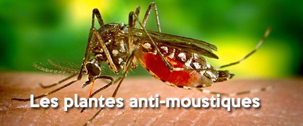 Les plantes anti-moustiques 600 x 250