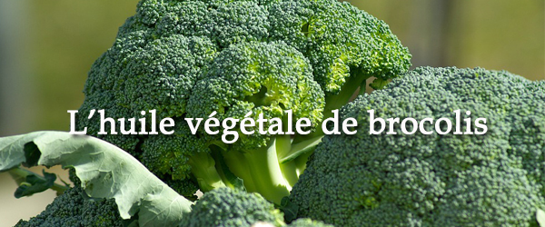 huile vegetale de brocolis 600 x 250