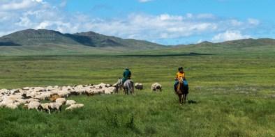 mongolische Cowboys