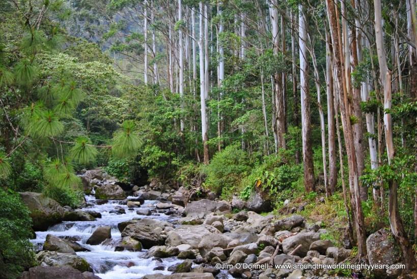 deforestation in panama