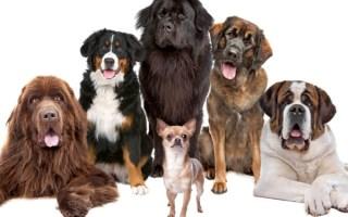 dog-group-orig